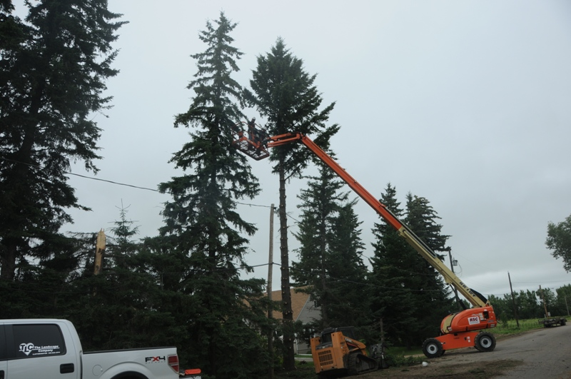 Excavation Lloydminster - Trees 19