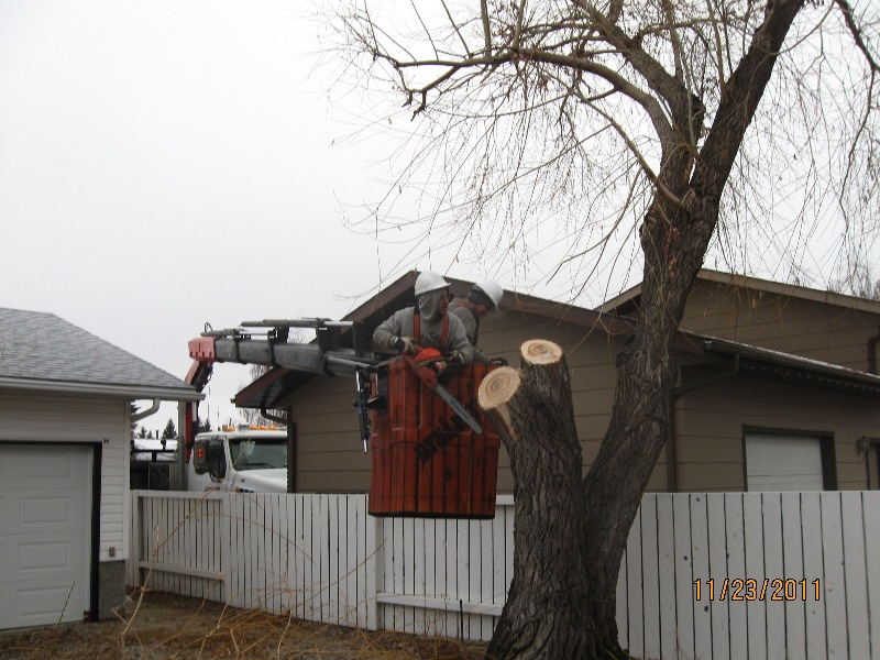 Septic Systems Lloydminster - Trees 24